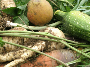 Des légumes sains en toutes saisons