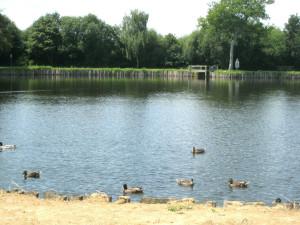 L'étang des Sarcelles : le lieu de rendez-vous hebdomadaire.